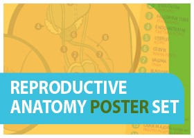 Reproductive Anatomy Poster Set