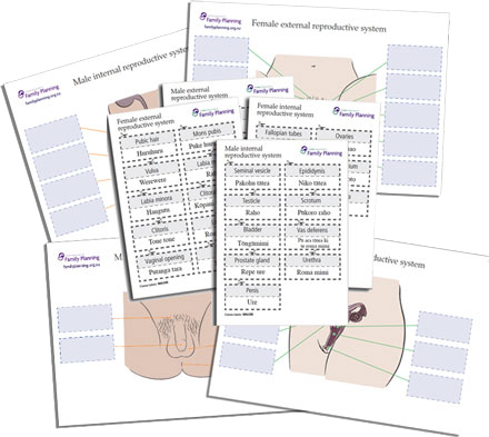 Reproductive System Boards and Labels
